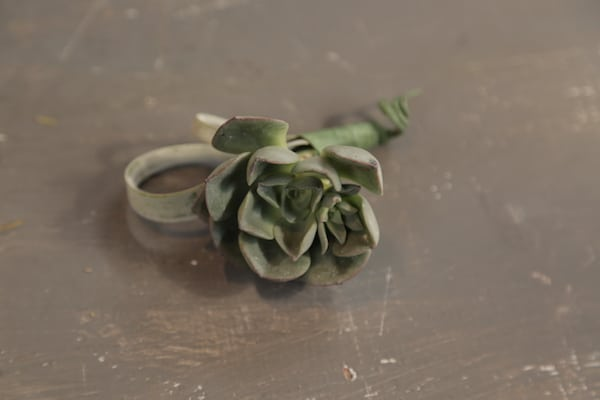 Wedding Green Goodness with DIY Air Plant and Succulent Boutonniere