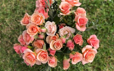 Product Spotlight: NEW In-Stock Pink Roses!