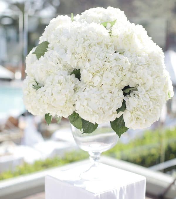 Wedding Flower Favorite: Hydrangeas