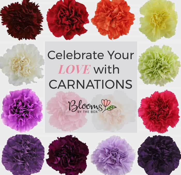 Celebrate with Carnations