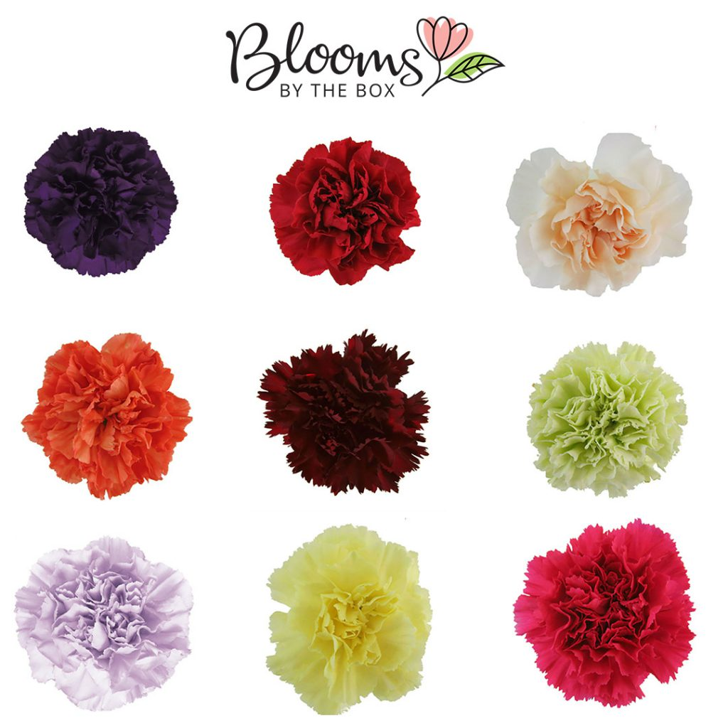 What Are The Cheapest Flowers To Buy In Bulk Blooms By The Box