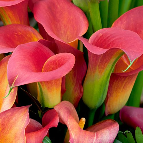 Types Of Lily Names: Types Of Flowers For Weddings