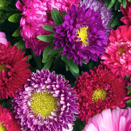 Browse our beautiful flower types by name
