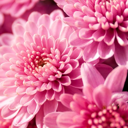 Types Of Flowers For Weddings Bloomsbythebox Com