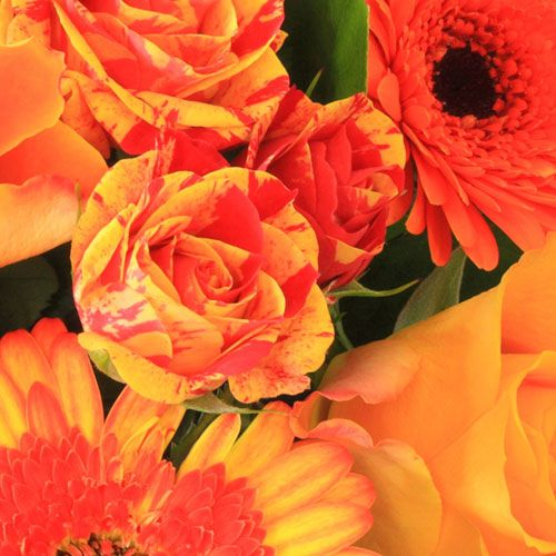 Wholesale flowers by color bloomsbythebox orange flowers mightylinksfo