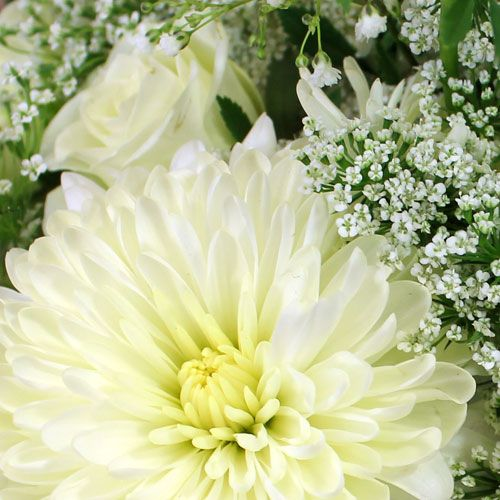 Wholesale flowers by color bloomsbythebox cream flowers mightylinksfo
