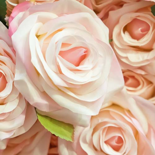 Wholesale flowers by color bloomsbythebox blush flowers mightylinksfo