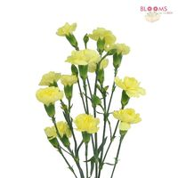 Mini Carnations Yellow