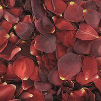 Red / Brown FD Rose Petals (30 Cups)