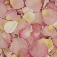 Assorted Pastel Blend FD Rose Petals (30 Cups)