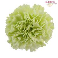 Carnations Green Fancy