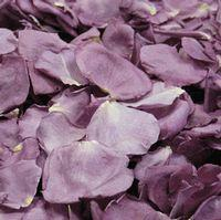 Fragrant Plum Rose Petals (30 Cups)