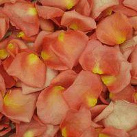 Peach Dream Petals (30 Cups)