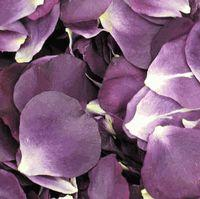 Passionate Purple Petals (30 Cups)