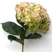 Hydrangea Green Antique Horizon