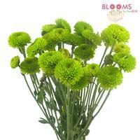 Pompon Button Green