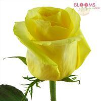Rose Yellow 40 cm.