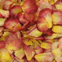 Chihuly Yellow/Red Blend Rose Petals (30 Cups)