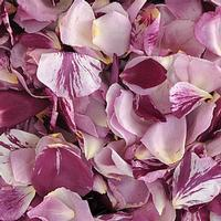 Passionate Kisses Fd Rose Petals (30 Cups)