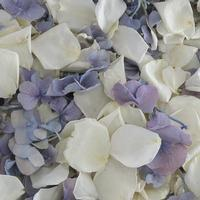 Something Blue Rose/Hydrangea Petals (30 Cups)