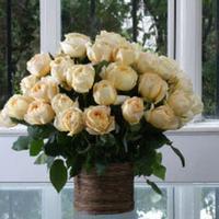 Cream Garden Rose caramel antike cream garden roses – wholesale – bloomsbythebox