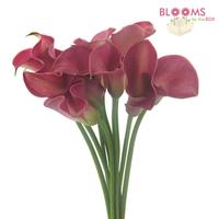 Calla Lily Mini Hot Pink
