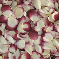 Blushing Bride Rose Petals (30 Cups)