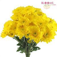 Cushion Pompon Yellow