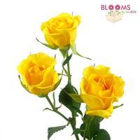 Spray Rose Yellow