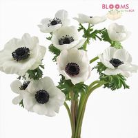 White anemone flowers with black eye bloomsbythebox previous next mightylinksfo Image collections