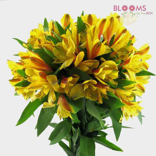 Yellow flowers diy yellow wedding flowers bloomsbythebox alstroemeria yellow mightylinksfo Choice Image