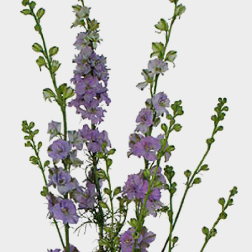 wholesale larkspur flowers larkspur for diy weddings
