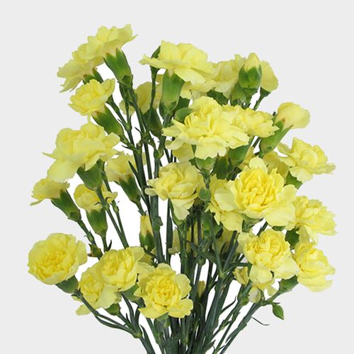 Yellow Mini Carnations