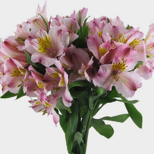 Pink flowers light hot pink wedding flowers alstroemeria pink mightylinksfo