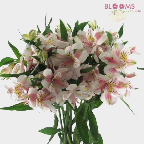 White flowers diy white wedding flowers bloomsbythebox alstroemeria white mightylinksfo Image collections