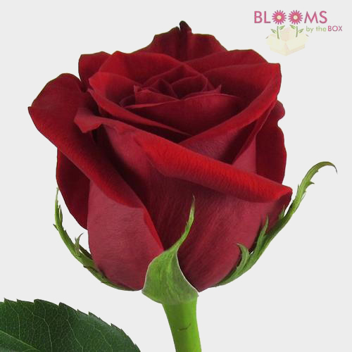 valentines day flowers wholesale, Ideas