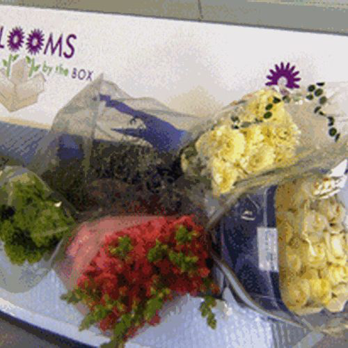 Wholesaler's Choice DIY Flower Pack (Medium)