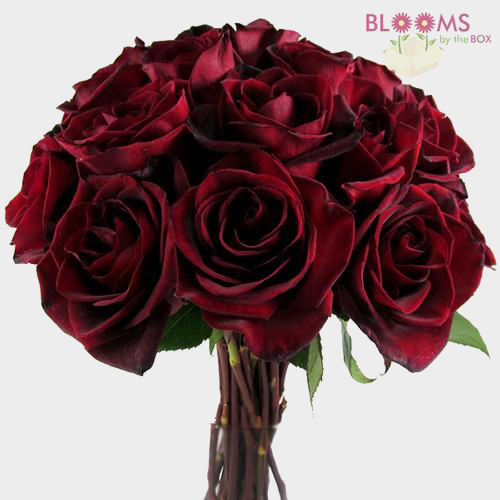 Red Garden Rose Bouquet black magic dark red rose – wholesale roses