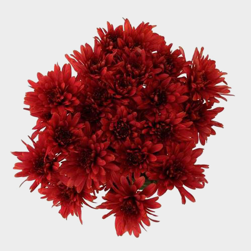 Cushion Pompon Red