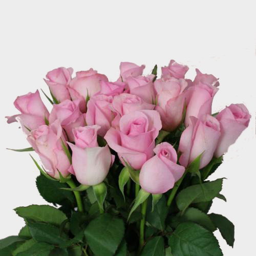 Sweetheart Roses Pink