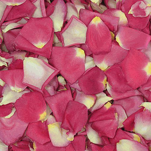 Ivory / Pink Bi-Color FD Rose Petals (30 Cups)
