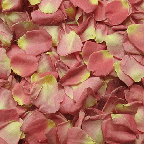 Wholesale coral flowers blooms by the box alluring pink fd rose petals 30 cups mightylinksfo