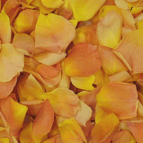 Yellow / Orange FD Rose Petals (30 Cups)