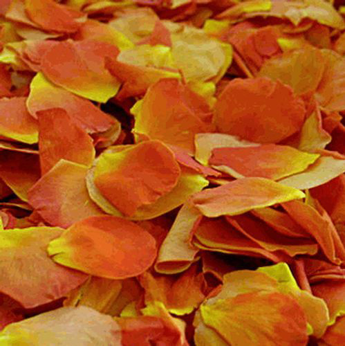 Orange / Yellow FD Rose Petals (30 Cups)