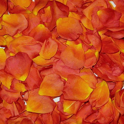 Yellow / Orange &  Red  FD Rose Petals (30 Cups)