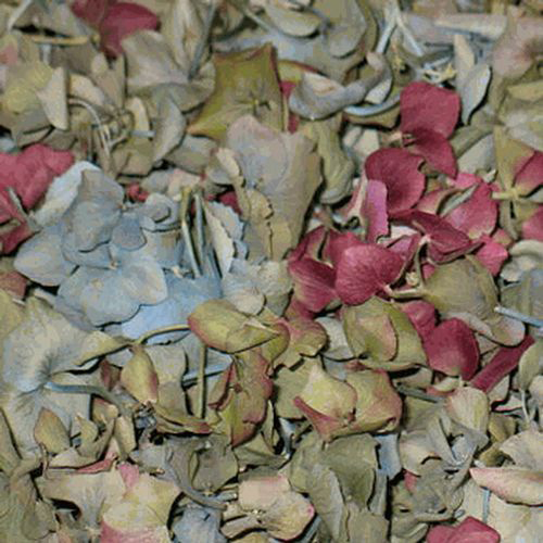 Assorted Colors FD Hydrangea Petals (30 Cups)