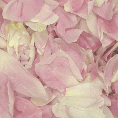 Wholesale blush flowers blooms by the box blush fd peony petals 30 cups mightylinksfo