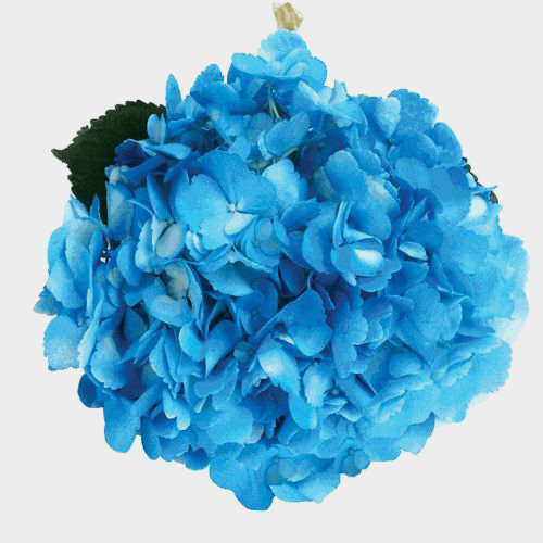 Spray Tinted Hydrangea - Medium Blue