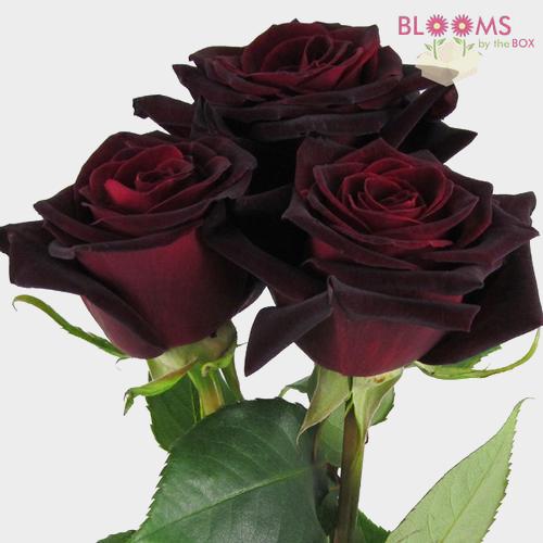 wholesale rose black baccara dark red 50cm blooms by the box. Black Bedroom Furniture Sets. Home Design Ideas