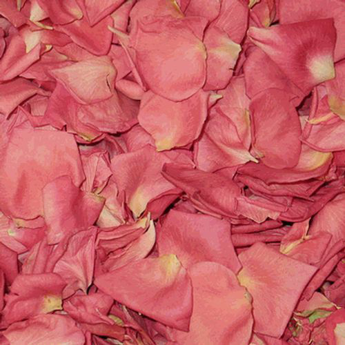 Salmon/coral Pink Petals (30 Cups)